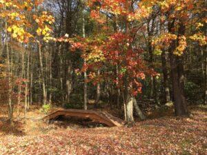 http://campingwithfivekids.blogspot.com/